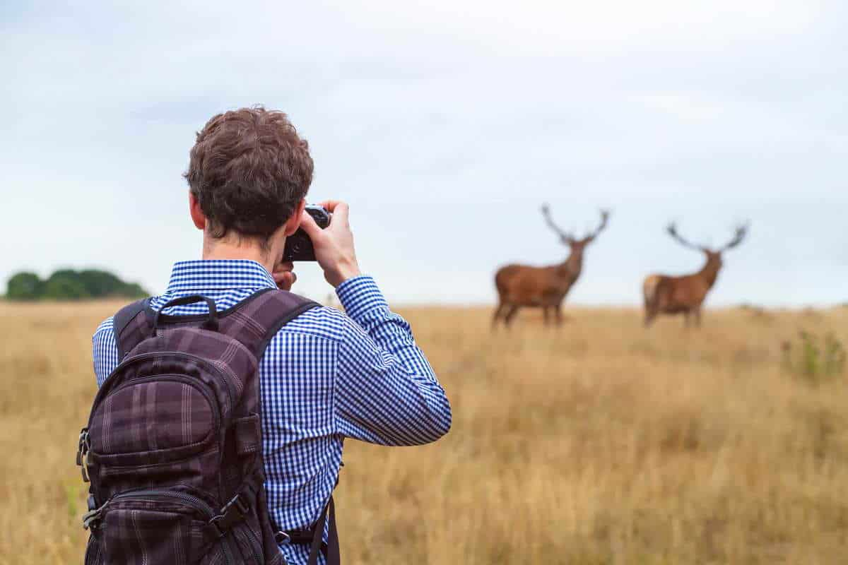 Wildlife Photography
